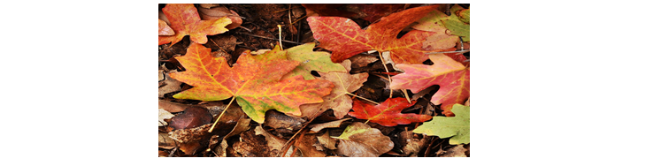 Fall leaves that are somewhat damp from dew reference image.