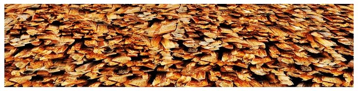 Reference image of fatwood fire sticks bundles.