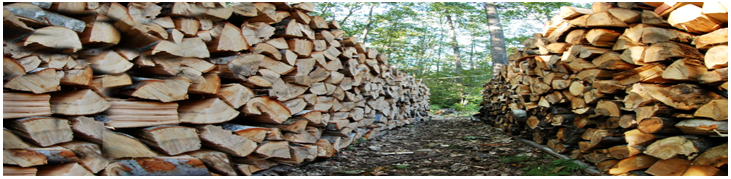 Two rows of seasoning firewood stacks.
