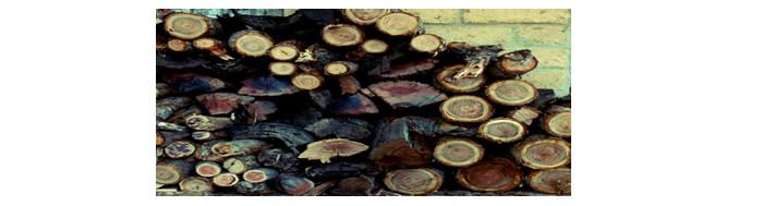 A pile of freshly cut firewood.