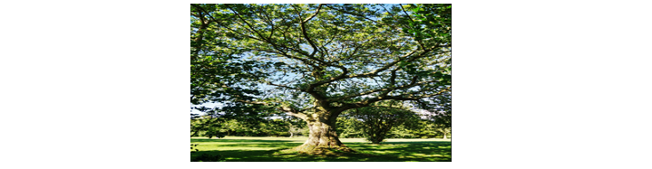 Twisted Ash Tree reference image.