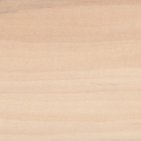 Sample of basswood wood texture