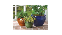 Jewel-Tone Flower Pot Trio 2