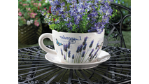 Lavender Fields Teacup Planter 2