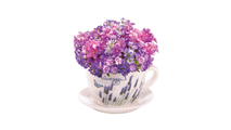 Lavender Fields Teacup Planter 3