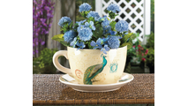 Peacock Teacup Planter 2
