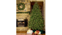 "4-12""H Full 72""W Fraser Fir Prelit Christmas Tree Warm White LED 2,000"