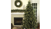 "5-6.5""H Full 54""W Carolina Fir Prelit Tree Warm White LED 700"