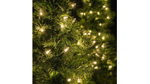 Walkway-Tree-Lights-9845