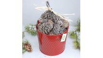Goods Of The Woods Color Cones in Red Pail