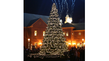 Giant Everest WinterGreen Christmas Tree