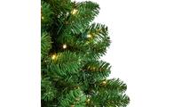 Oregon Tree Tip