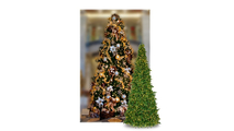 Olympia Pine Commercial  Mini Frame Trees