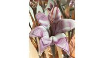 Lilac Trumpet Flower - Complete Kit
