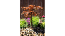Japanese Maple Tree - Fountain Only
