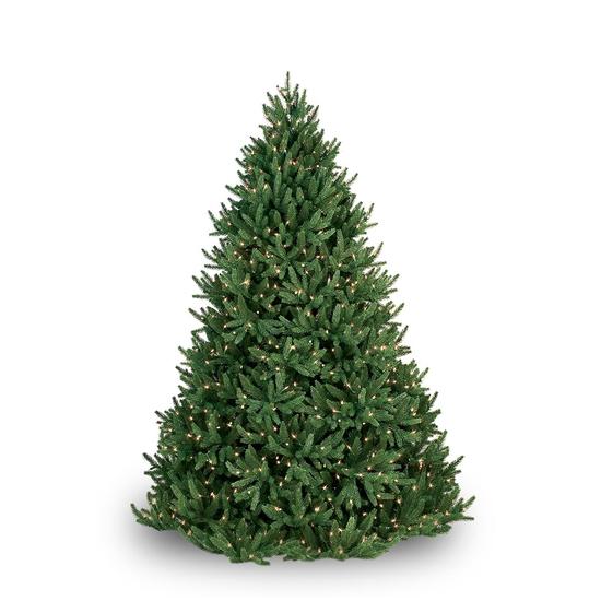 Noble Fir Prelit Tree Warm White LED