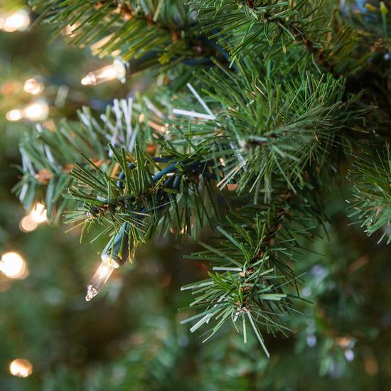 Douglas Fir Tree Tip