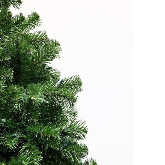 Sequoia fir Christmas Tee