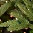 """3--6.5""""H Full 54""""W Noble Fir Prelit Tree Warm White LED 600"""