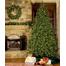 """4-12""""H Full 72""""W Fraser Fir Prelit Christmas Tree Warm White LED 2,000"""