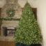 "5-7.5""H Slender 48""W Winchester Fir Prelit Tree Warm White LED 750"