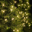 Walkway-Tree-Lights-9845